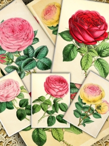 Roses Digital Collage Sheet, Printable Download