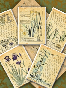 French Botanicals Printable Backgrounds, ACEO, ATC Images