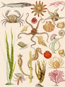 Marine Life, Sea Creatures Collage Sheet, Color Printable Images