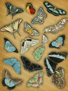 Butterfly Digital Collage Sheet, Vintage Colored Butterflies